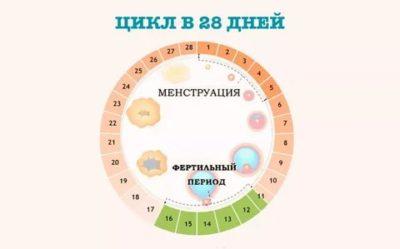 Как определить фертильные дни