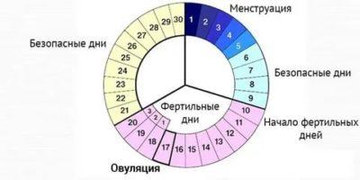 Сколько дней происходит овуляция у женщин