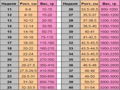 Сколько должен весить плод в 24 недели