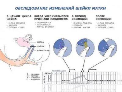 Как определить в каком яичнике происходит овуляция