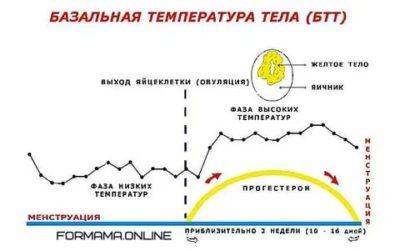 Какой должна быть температура при овуляции