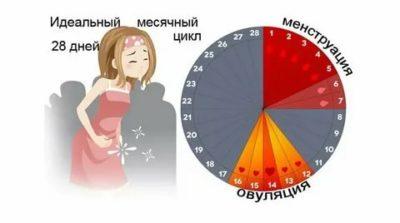 Сколько дней идут месячные у женщин