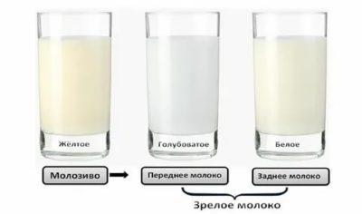 Как на вкус молозиво