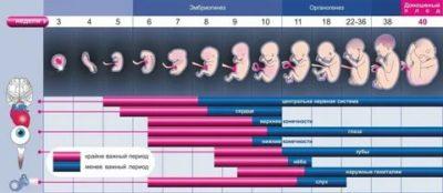 Сколько длится беременность с момента зачатия