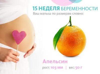 Какой размер плода на 15 неделе беременности