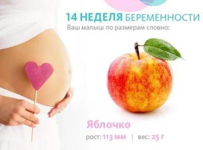 Какого размера плод на 14 неделе