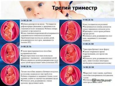 Что такое третий триместр беременности