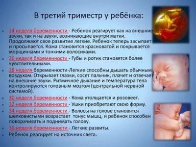 На каком месяце беременности ребенок начинает слышать