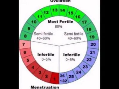 Когда происходит овуляция при цикле 21 день