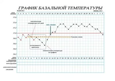 Что такое базальная температура при беременности