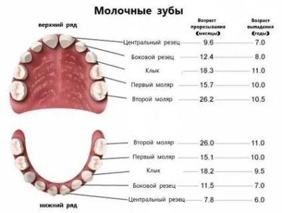 Сколько должно быть у ребенка молочных зубов