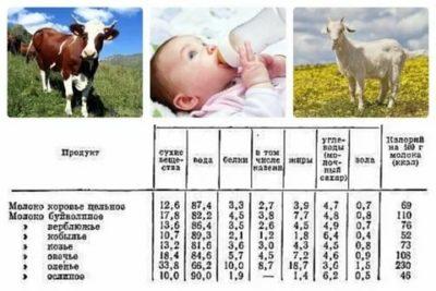 Когда младенцу можно давать коровье молоко